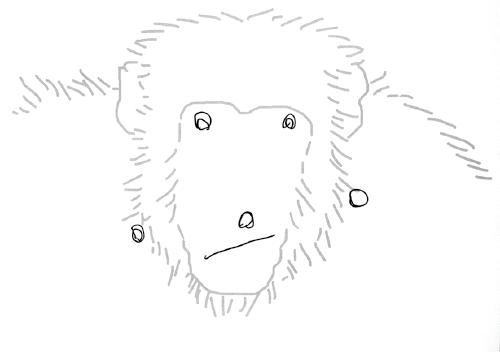 チンパンジーは,描かれて「ある」部位をなぞり(左),人間の3 歳児 は「ない」部位をおぎなった(右)