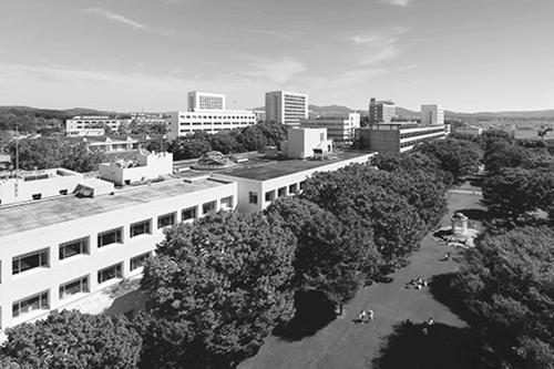写真1 緑豊かなキャンパス