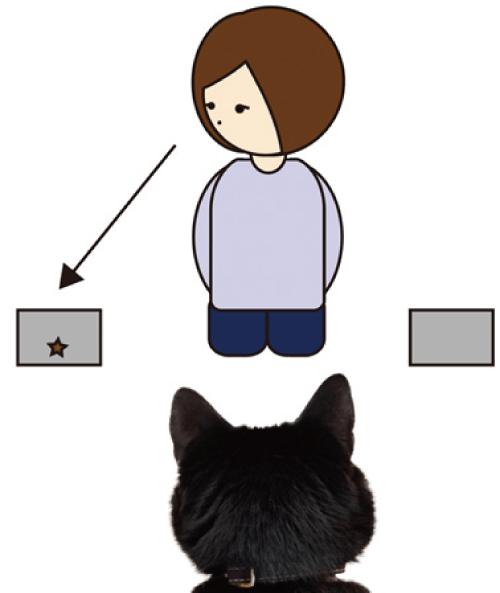 図2 視線手掛かり実験。ネコはヒトが視線を向けた容器を有意に選択した。
