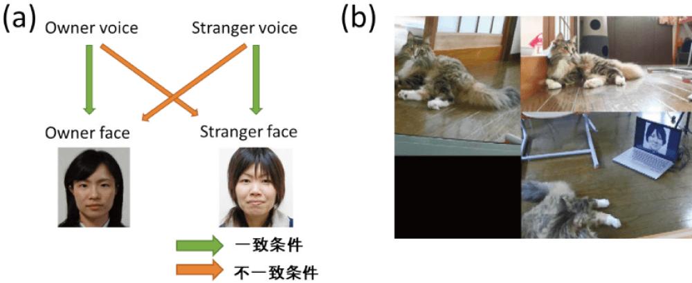 図4 クロスモーダル統合実験の(a)実験条件,(b)実験に参加するネコ(三方向から撮影)