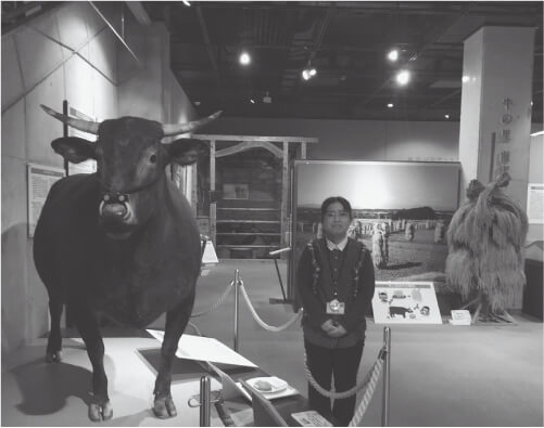 牛の博物館の展示室にて 黒毛和種「清菊」の剥製と