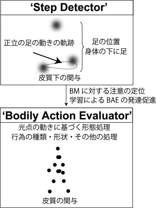図2 BM知覚処理発達モデル(Step DetectorとBodily Action Evaluator)